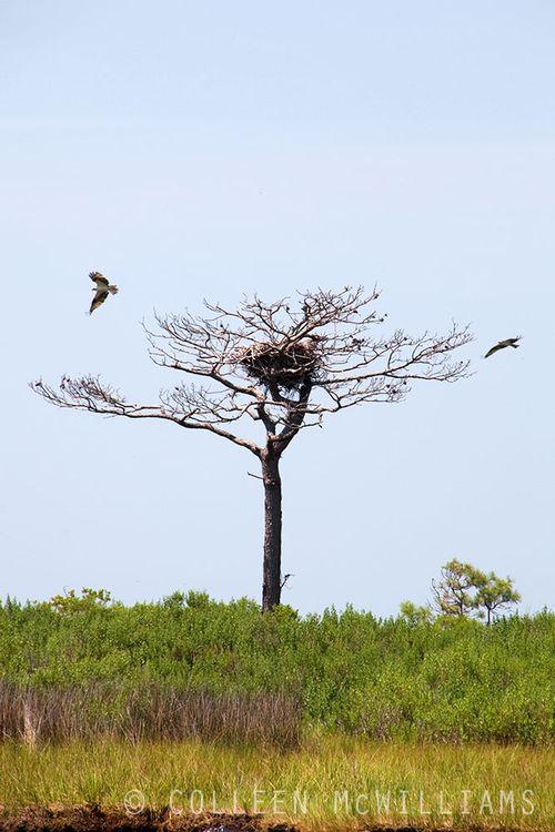 Birds on the Chesapeake.